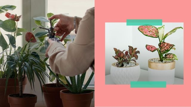 Want To Be A Plant Mom? 7 Ways To Make Sure Your Indoor Plants Don't Die On You