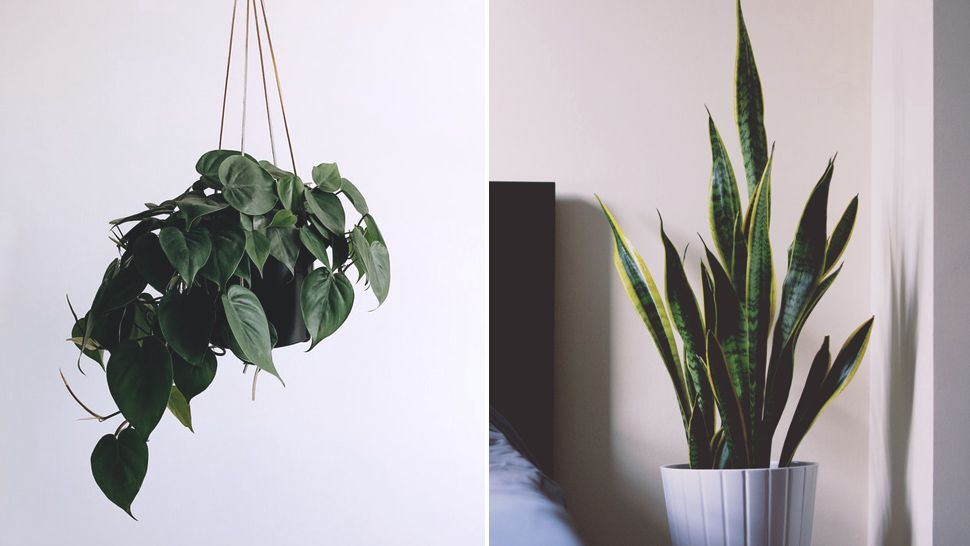 Start Your Garden Now! The Best Indoor Plants for Beginners