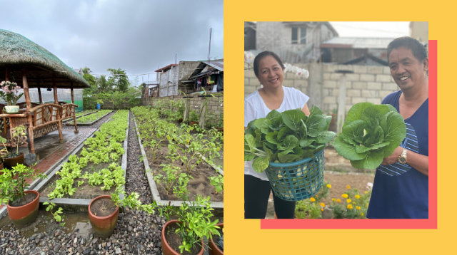 Family Now Earns P50,000 Per Harvest After Transforming Unused Lot Into A Garden
