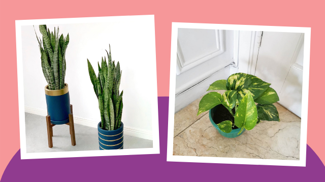 Hirap Makatulog? 8 Indoor Plants That Can Help You Sleep Better