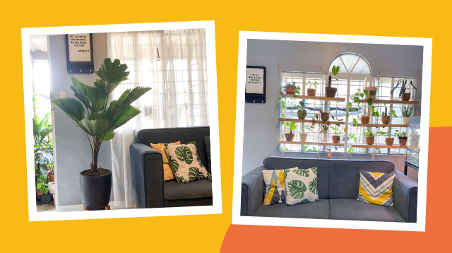 Mom Replaces Curtains With Plant-Filled Shelves To Brighten Her Living Room!