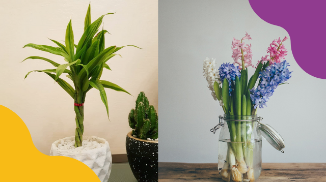 Never Kill A Houseplant Again! 6 No-Soil Indoor Plants That Only Need Water To Grow
