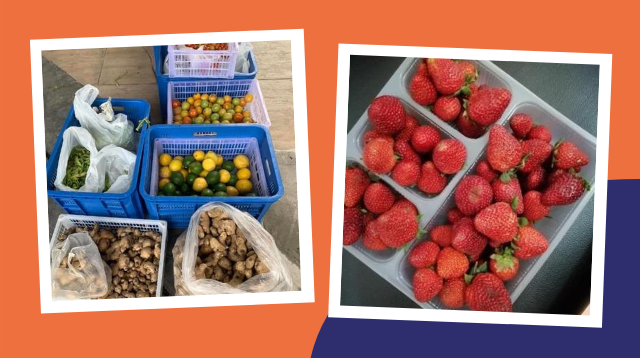 'CLOY' Offers Fruits And Veggies, Good Shepherd Goodies, Raw Honey, And More!