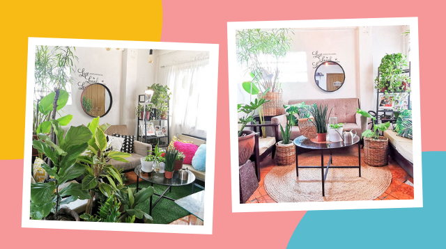 What Houseplants Are Low Maintenance? This Hala-'Mom' Shows Us Her Living Room!