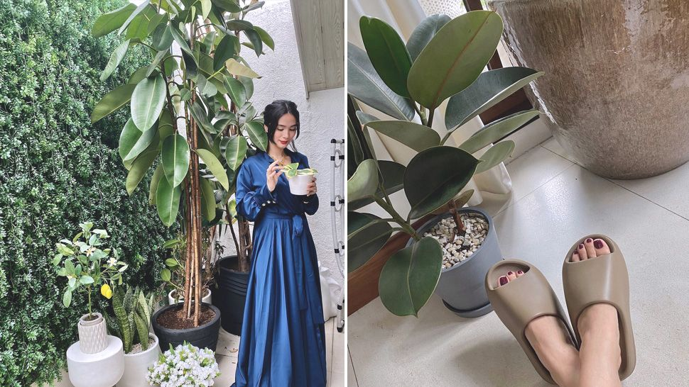 She Has Indoor Trees! All The Plants We Love in Heart Evangelista's Home