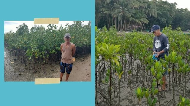 Tatay Gary Planted 10,000 Mangroves Without Spending For Seeds!