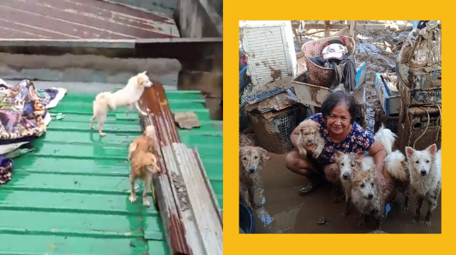 These Hero Dogs Saved Their Family While Trapped On The Roof During Typhoon Ulysses