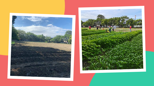 May Buhay Sa Gulay! Watch How This Community Turned An Idle Soccer Field Into A Vegetable Garden