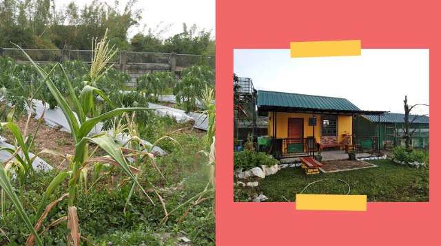 This Family's Tiny Farm In Bulacan Became Their Safe Haven During The Pandemic