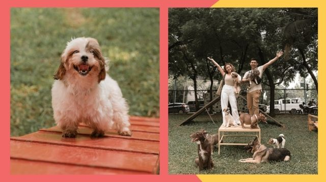 Fur Parents, First Off-Leash Dog Park In BGC Is Now Open!