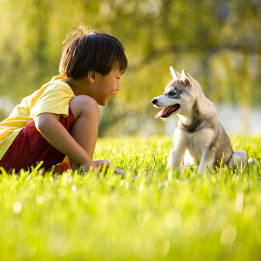 Dog Bite Cases Increase During the Summer, DOH Warns