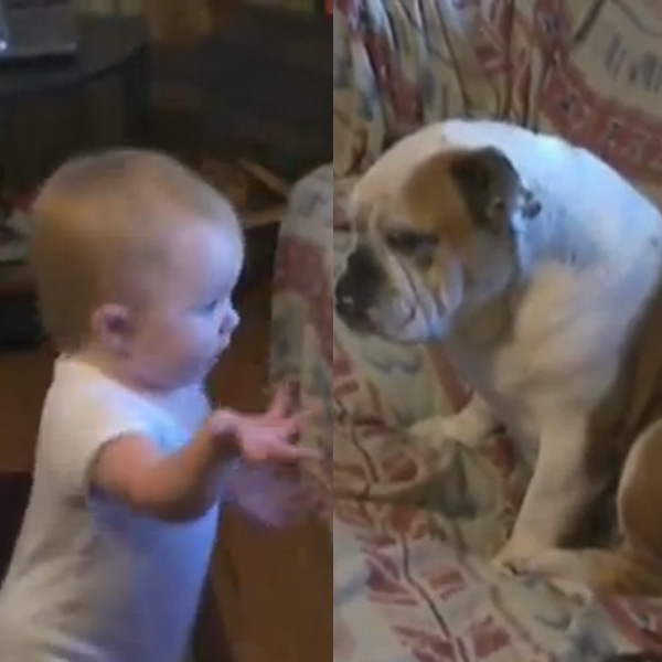This Made our Day: Baby Gives Dog a Piece of His Mind