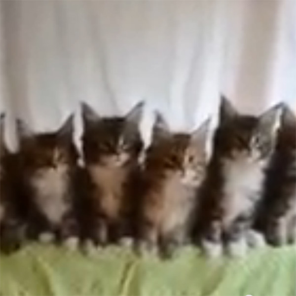 This Made our Day: Synchronized Wiggling, Kitten-Style