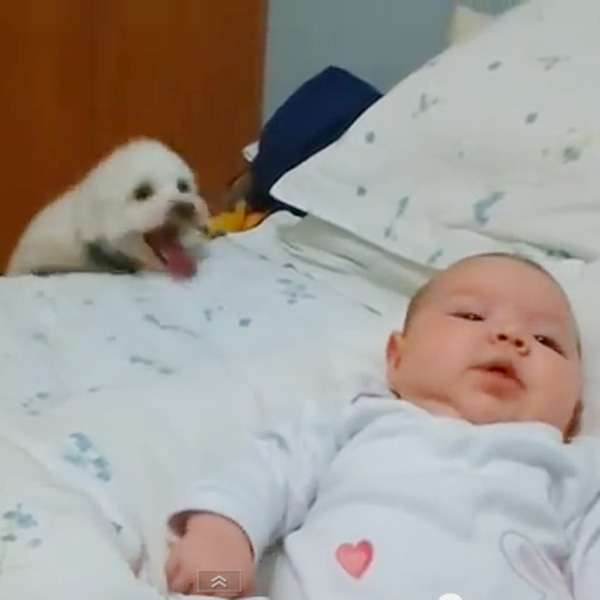 This Made our Day: Puppy Wants to See Baby, Won't Give Up