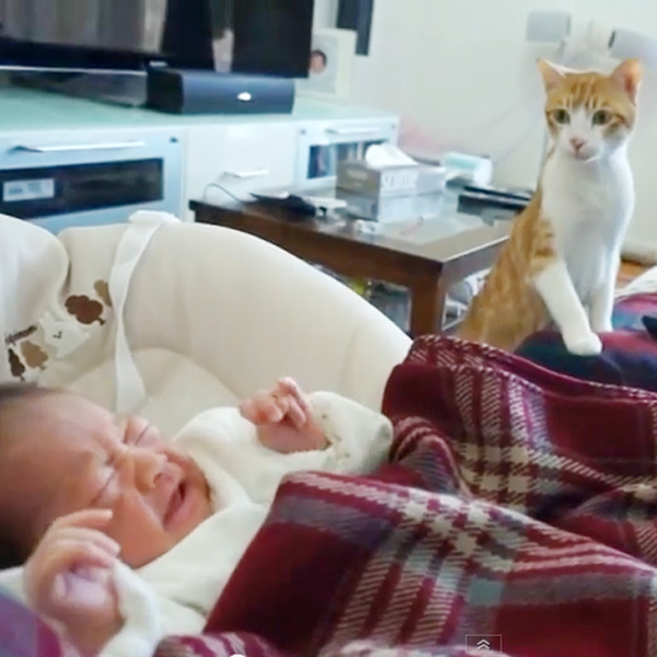 This Made our Day: Newborn Comes Home to Curious Cats