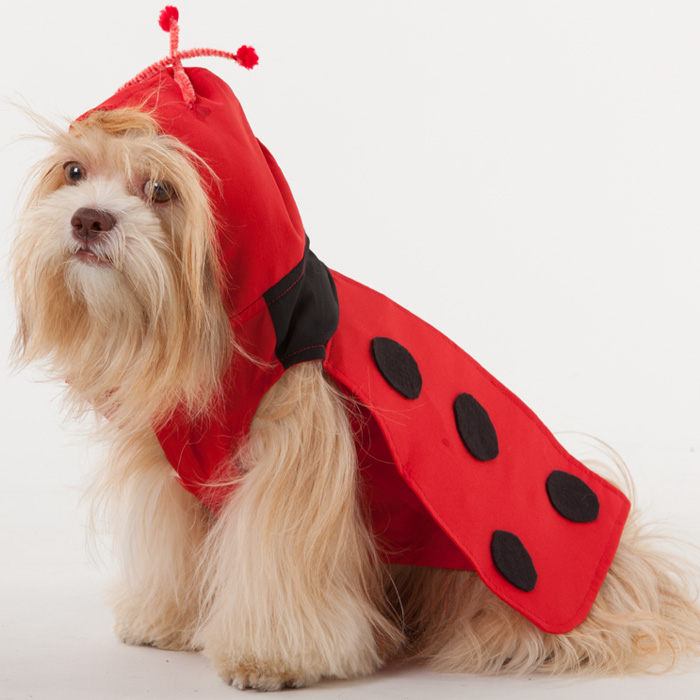 10 Adorable Costumes for your Pet Dog