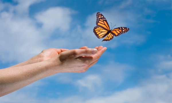 release butterfly