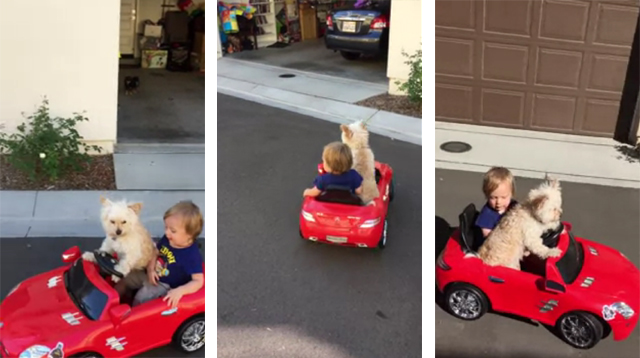 This Made Our Day: Dog Happily Drives Around a Toddler in a Toy Car