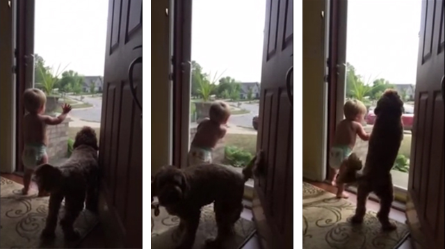 This Made Our Day: Baby and Dog are So Excited that Dad's Home