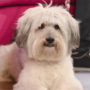 Dancing Dog 'Pudsey' to Star in a Movie