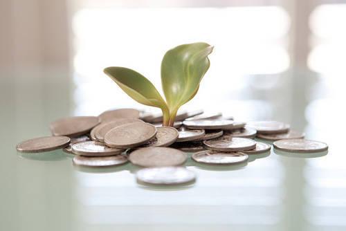 coins seedling
