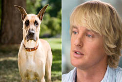 Owen Wilson as the voice of Marmaduke
