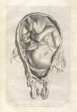 baby in womb