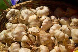 1549_29_12___Garlic_web_CI.jpg