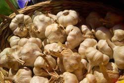 1549_29_12___Garlic_web_CI.jpg