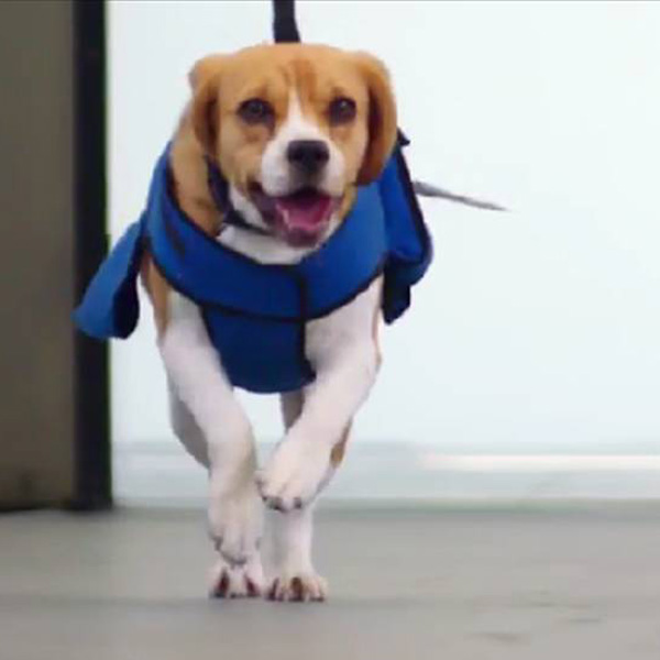 This Made our Day: Meet KLM's Lost & Found Team Hero