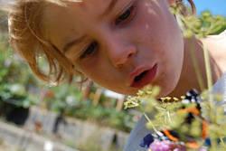 kid plant