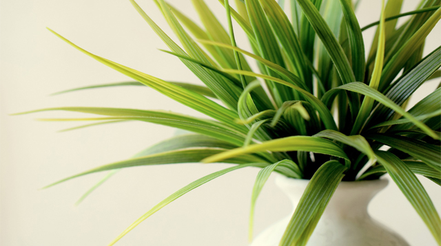 Clean the Air in Your Home With These 7 Indoor Plants