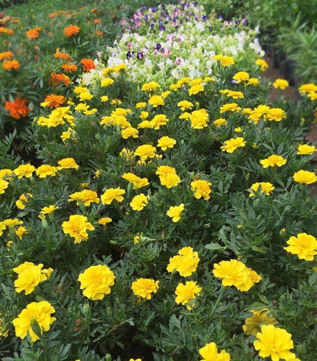 Aani Flowers