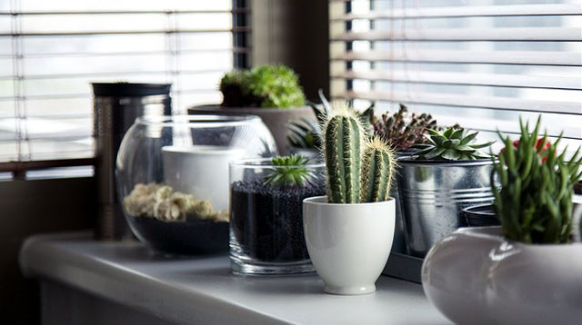 3 Reasons Why You Should Grow Succulents At Home
