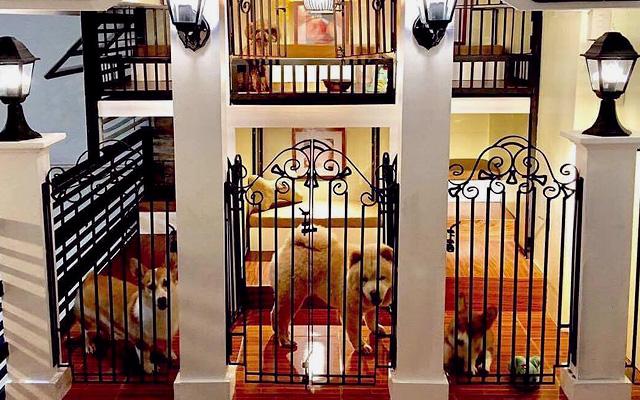 Dog And Cat Hotels Around Metro Manila