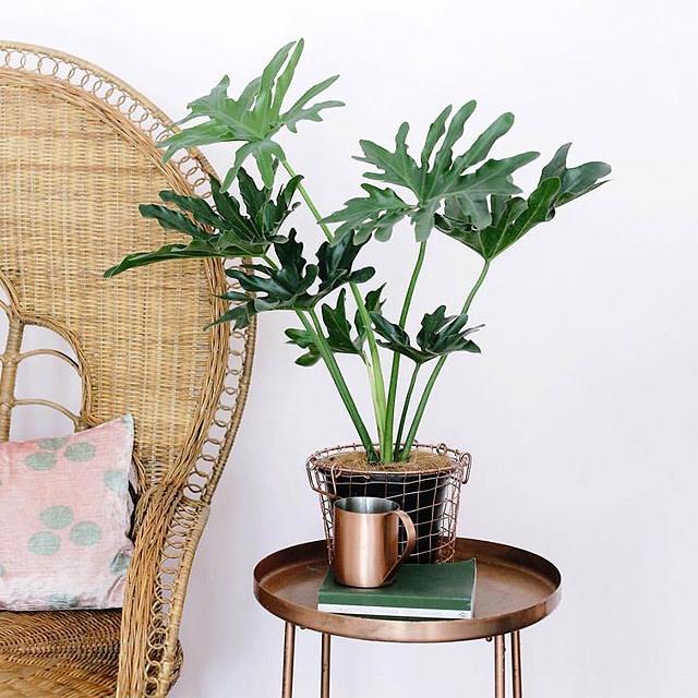 plant price