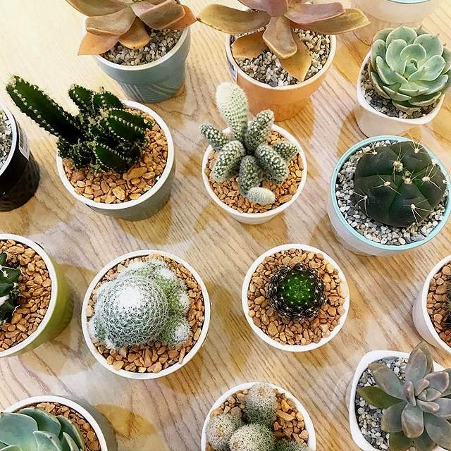 10 Stores to Buy Indoor Plants in Metro Manila