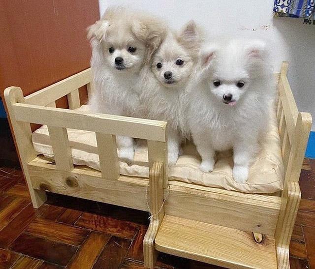 Cute Pet Beds