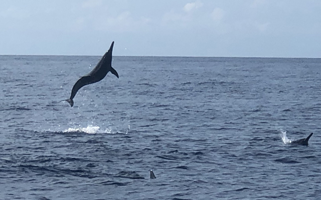 dolphin-watching in bohol