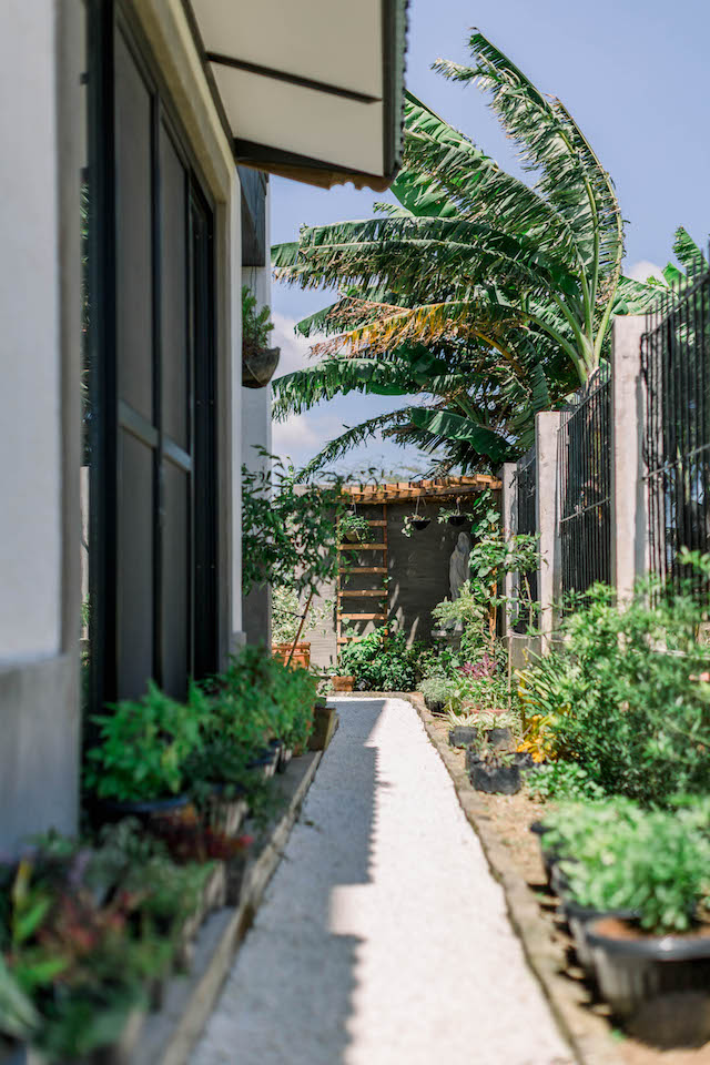 a side garden with potted plants and a pathway made of marble chips