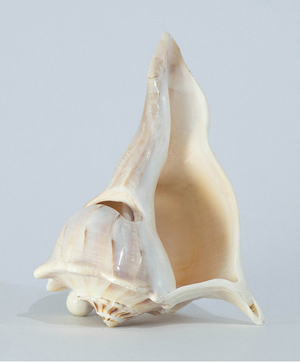 Loudbasstard Conch Shell Speaker Dock
