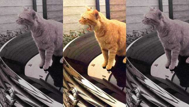 Cats inside car engine bays: How to avoid killing them