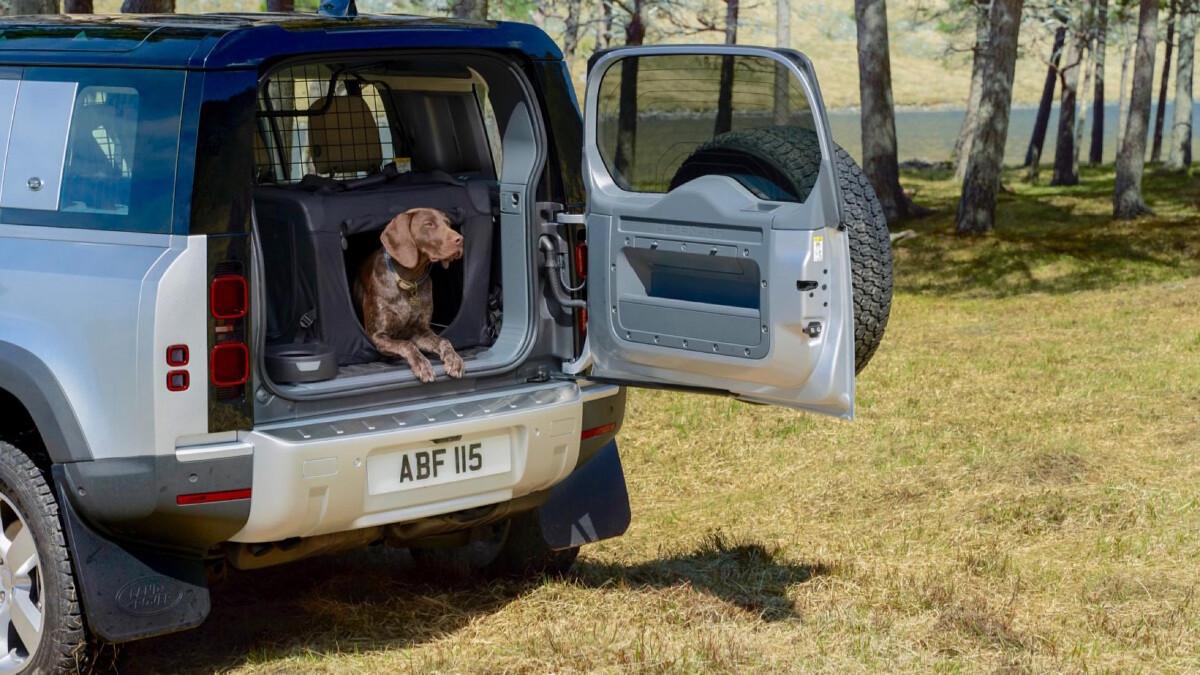 Land Rover Defender with a Brown Labrador