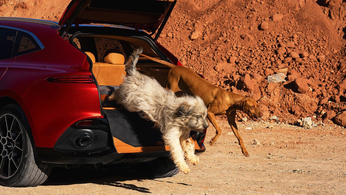 Aston Martin DBX with dogs coming out of the trunk door