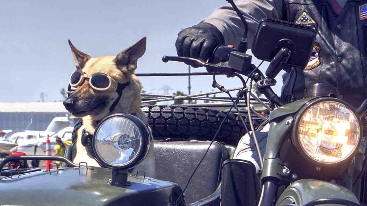 A sidecar with a goggle-wearing dog