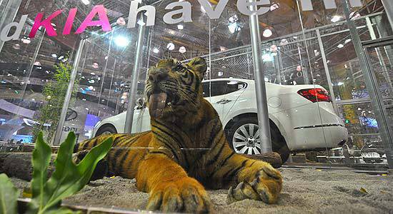 TopGear.com.ph Philippine Car News - Tigers at the KIA booth in PIMS