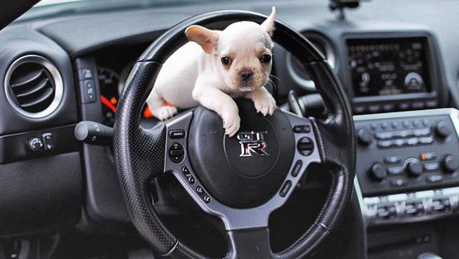 Cute dogs in cars