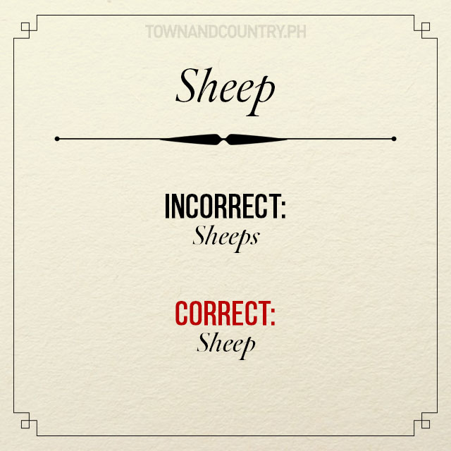 Sheep Singular Grammar Review on Conf...