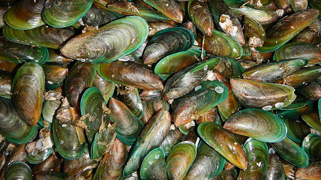 tahong or Asian green mussels